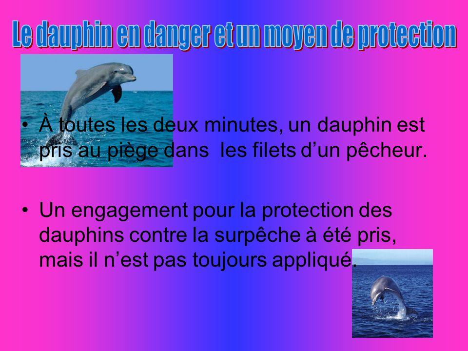 Le dauphin en danger et un moyen de protection