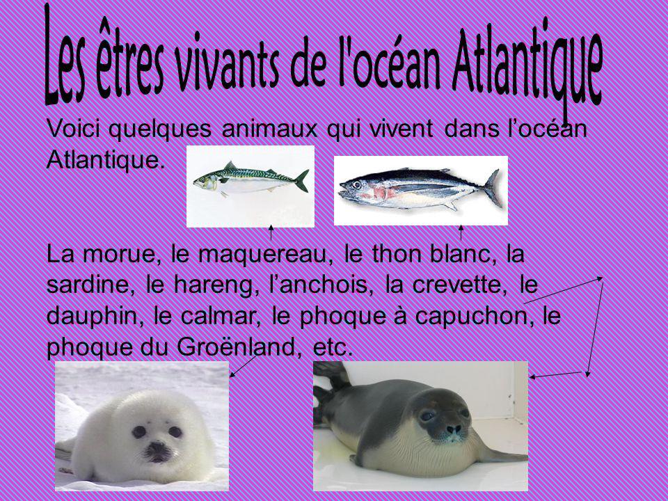 Les êtres vivants de l océan Atlantique