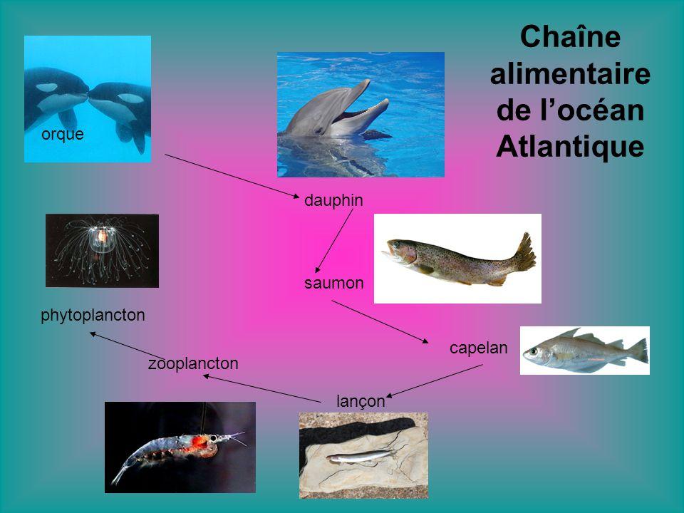 Chaîne alimentaire de l'océan Atlantique