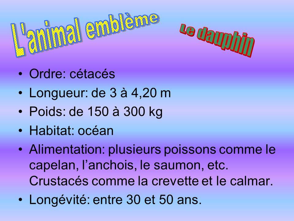 L animal emblème Le dauphin Ordre: cétacés Longueur: de 3 à 4,20 m