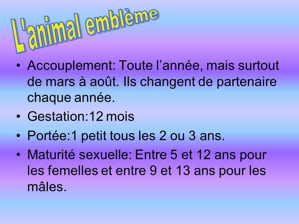 L animal emblème Accouplement: Toute l'année, mais surtout de mars à août. Ils changent de partenaire chaque année.