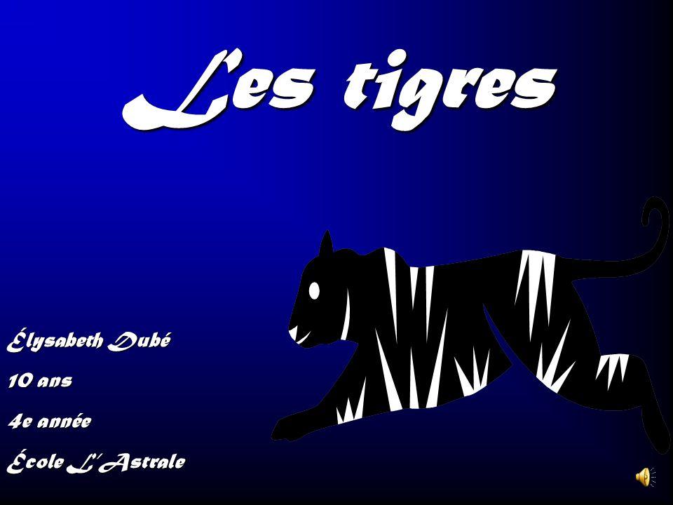Les tigres Élysabeth Dubé 10 ans 4e année École L'Astrale
