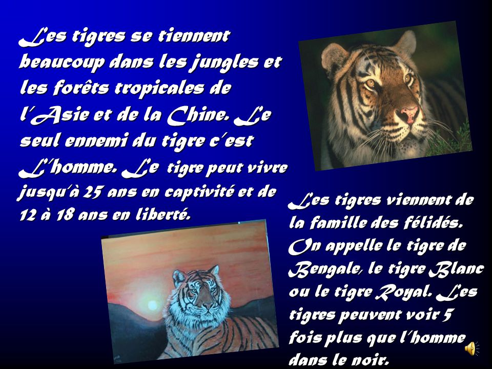 Les tigres se tiennent beaucoup dans les jungles et les forêts tropicales de l'Asie et de la Chine. Le seul ennemi du tigre c'est L'homme. Le tigre peut vivre jusqu'à 25 ans en captivité et de 12 à 18 ans en liberté.