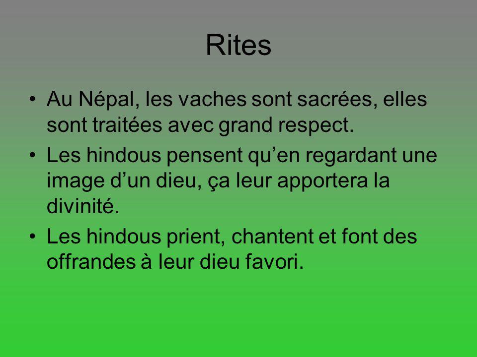 Rites Au Népal, les vaches sont sacrées, elles sont traitées avec grand respect.
