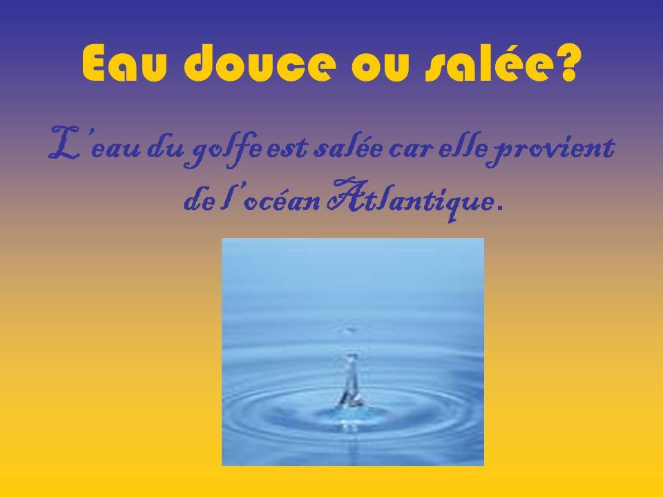 L'eau du golfe est salée car elle provient de l'océan Atlantique.