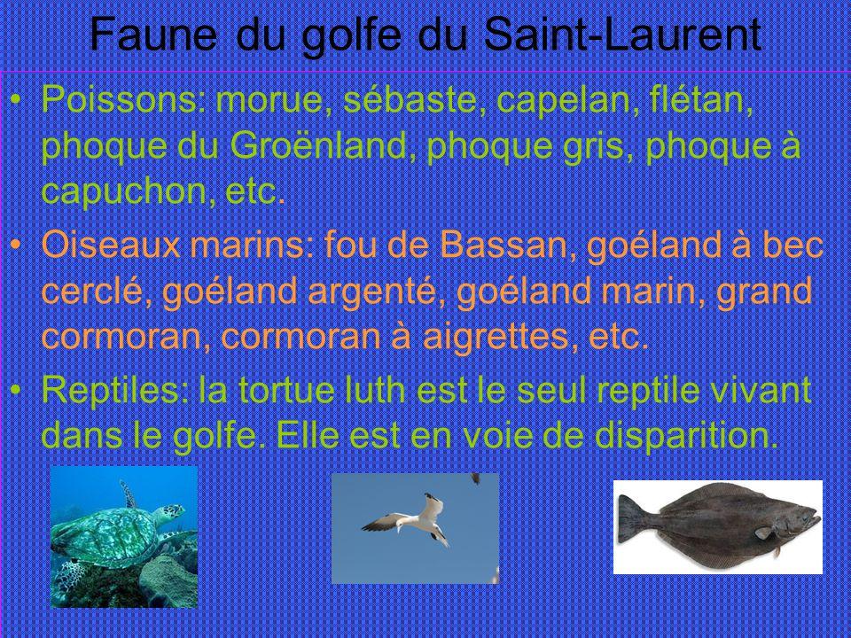 Faune du golfe du Saint-Laurent