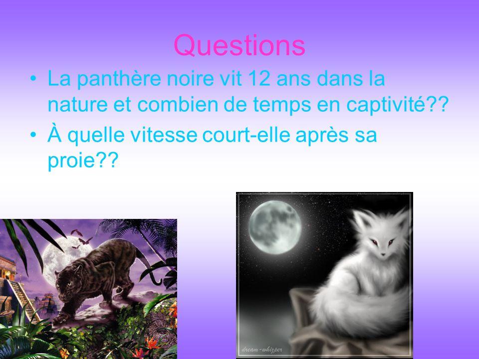 Questions La panthère noire vit 12 ans dans la nature et combien de temps en captivité .