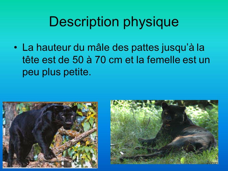 Description physique La hauteur du mâle des pattes jusqu'à la tête est de 50 à 70 cm et la femelle est un peu plus petite.