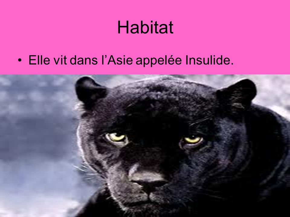 Habitat Elle vit dans l'Asie appelée Insulide.