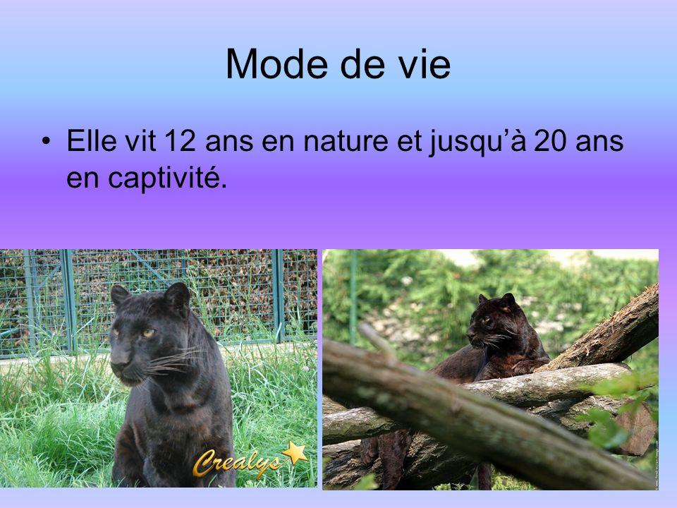 Mode de vie Elle vit 12 ans en nature et jusqu'à 20 ans en captivité.