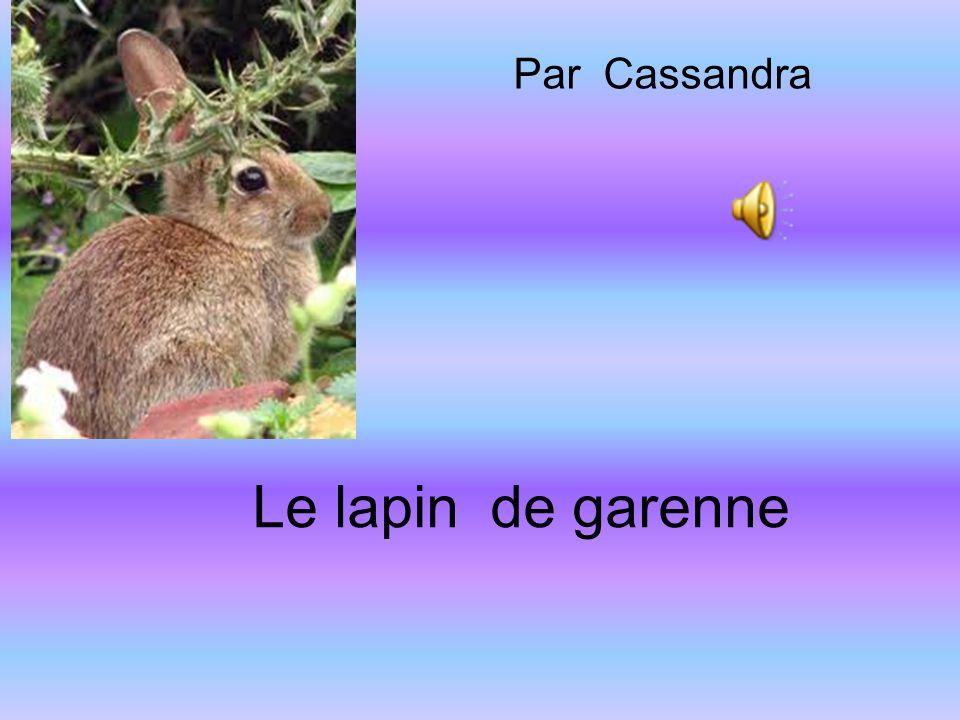 Par Cassandra Le lapin de garenne