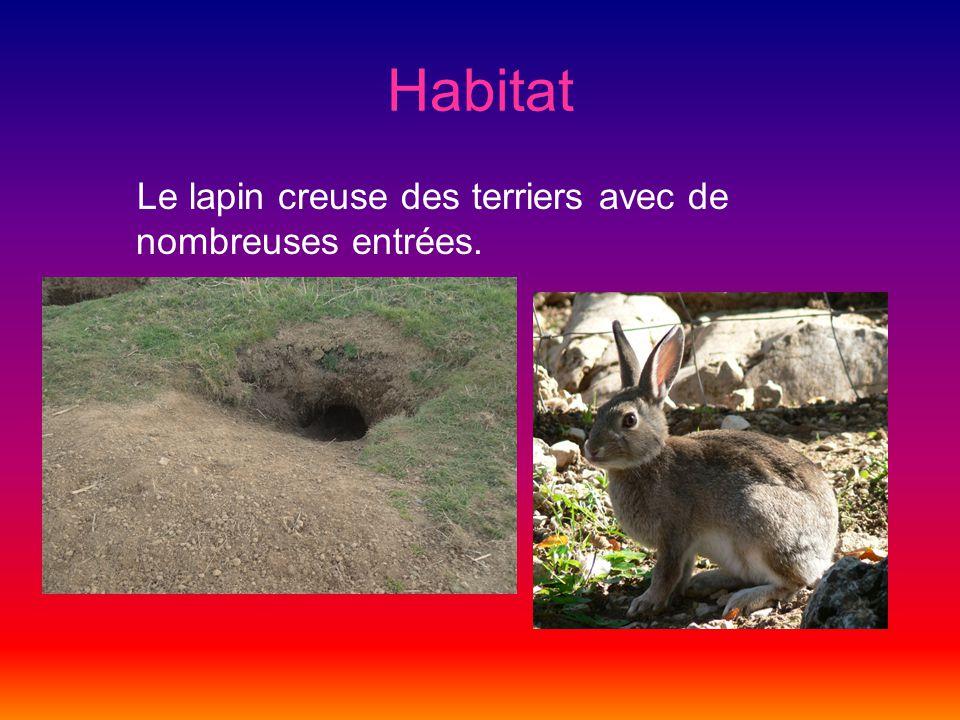 Habitat Le lapin creuse des terriers avec de nombreuses entrées.