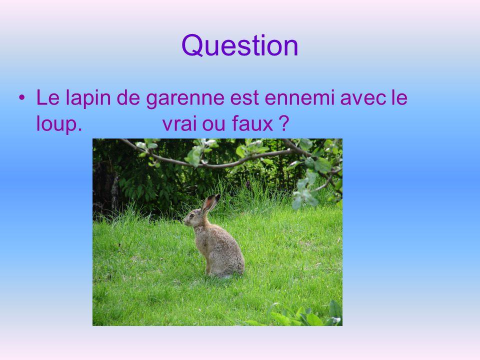Question Le lapin de garenne est ennemi avec le loup. vrai ou faux
