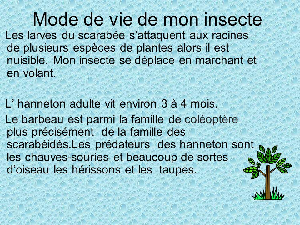 Mode de vie de mon insecte