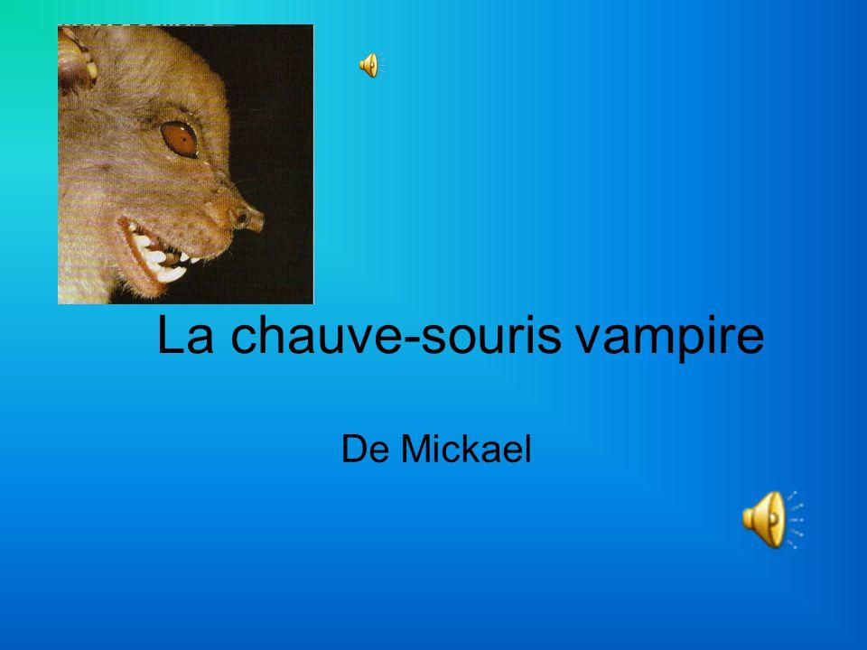 La chauve-souris vampire