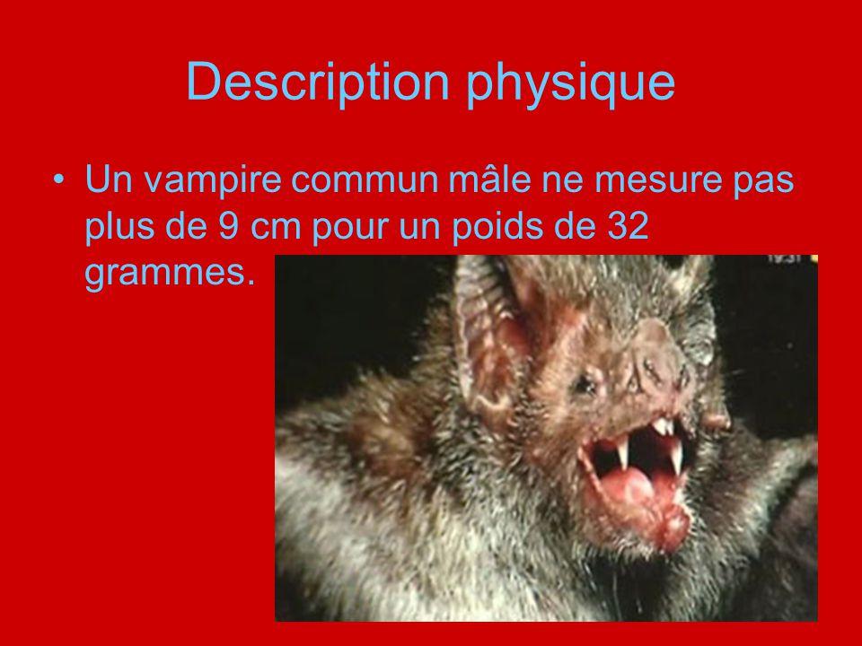 Description physique Un vampire commun mâle ne mesure pas plus de 9 cm pour un poids de 32 grammes.