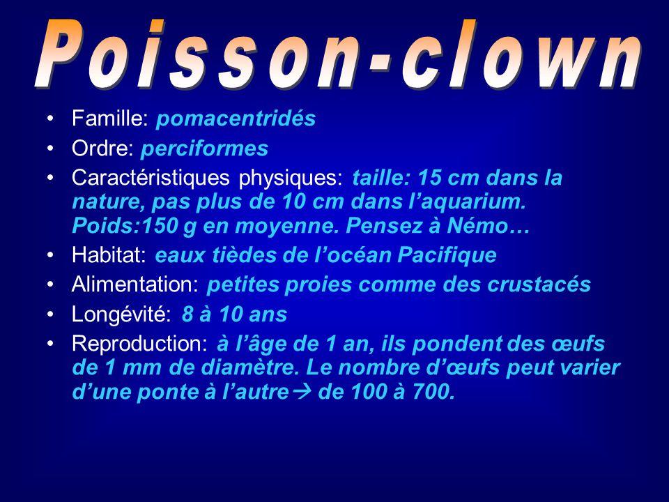 Poisson-clown Famille: pomacentridés. Ordre: perciformes.