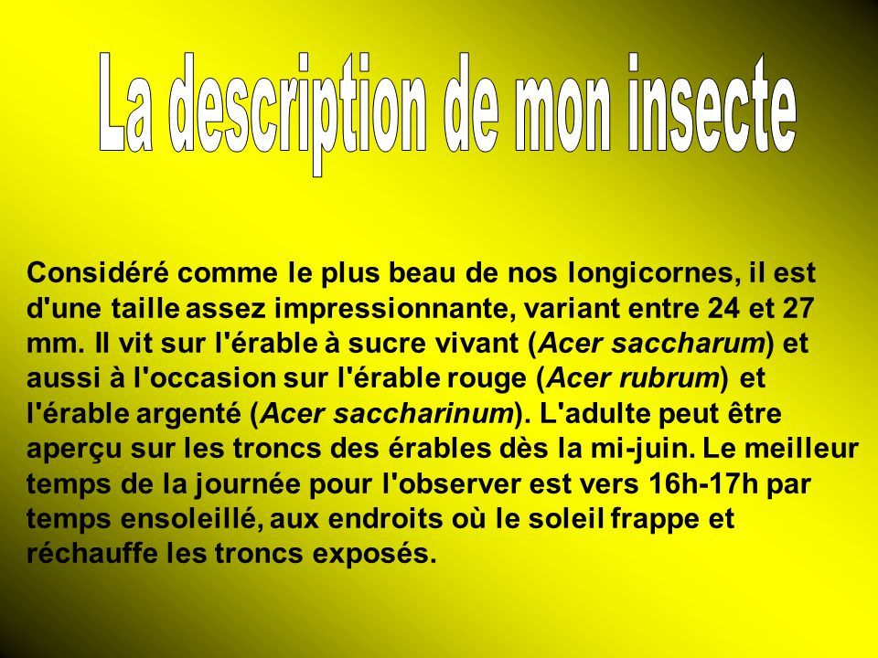 La description de mon insecte