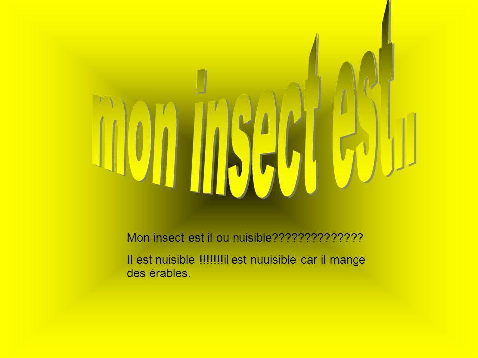 mon insect est.. Mon insect est il ou nuisible