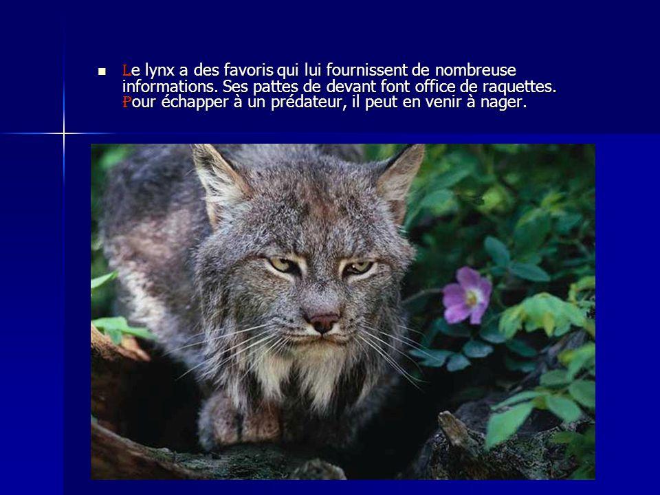 Le lynx a des favoris qui lui fournissent de nombreuse informations