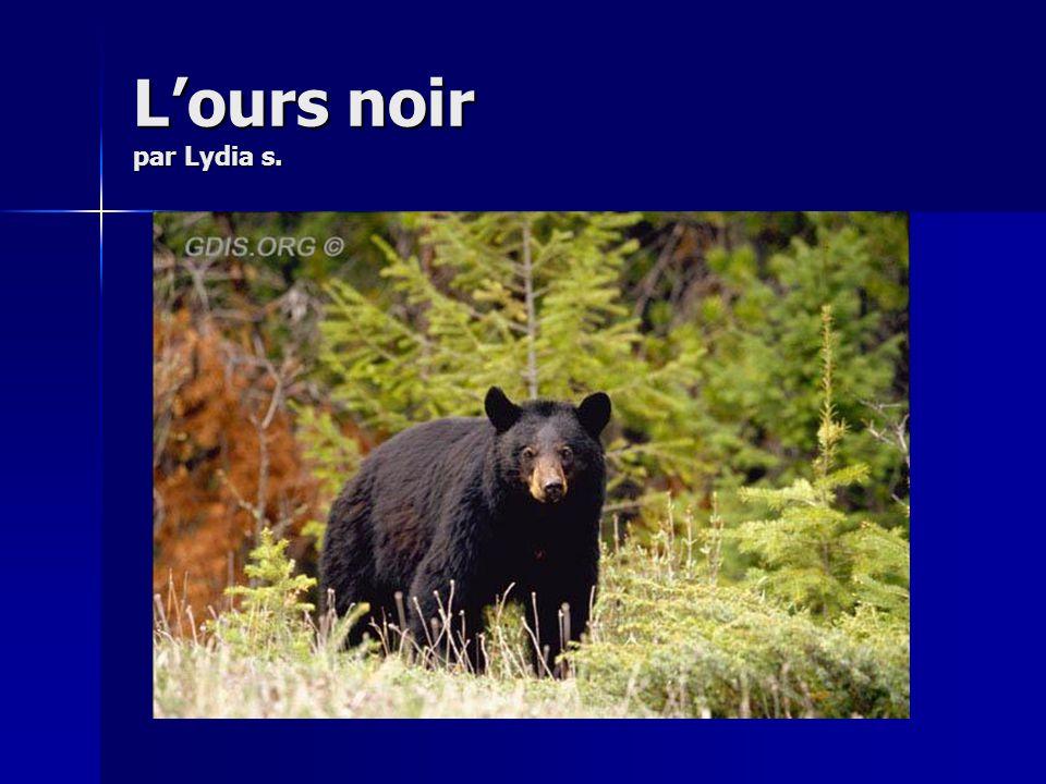 L'ours noir par Lydia s.