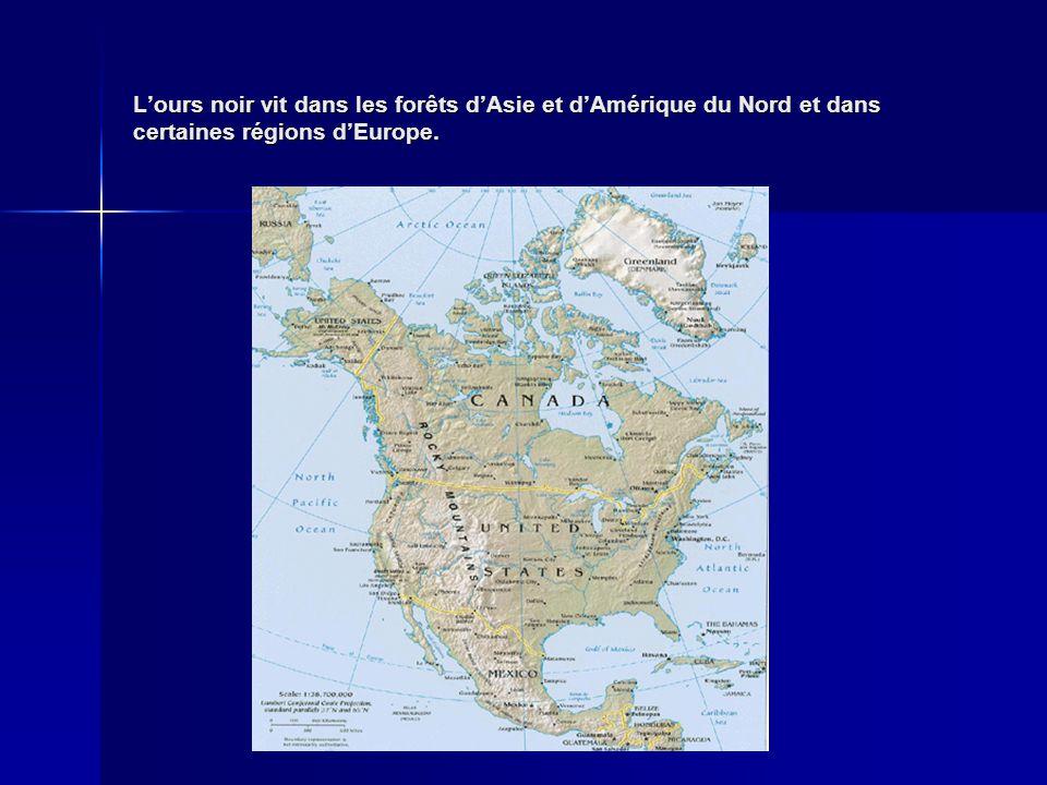L'ours noir vit dans les forêts d'Asie et d'Amérique du Nord et dans certaines régions d'Europe.