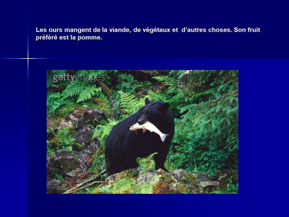 Les ours mangent de la viande, de végétaux et d'autres choses