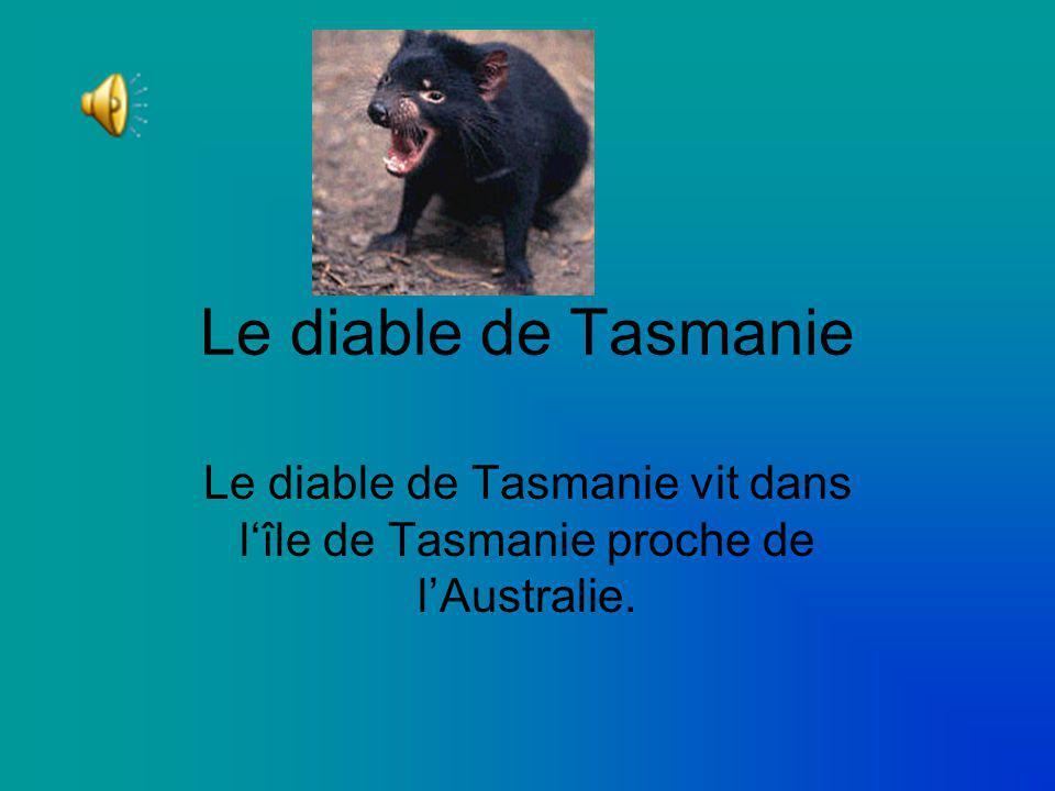 Le diable de Tasmanie Le diable de Tasmanie vit dans l'île de Tasmanie proche de l'Australie.