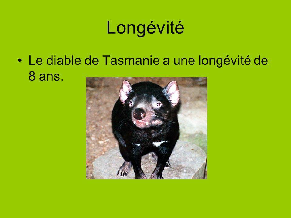 Longévité Le diable de Tasmanie a une longévité de 8 ans.
