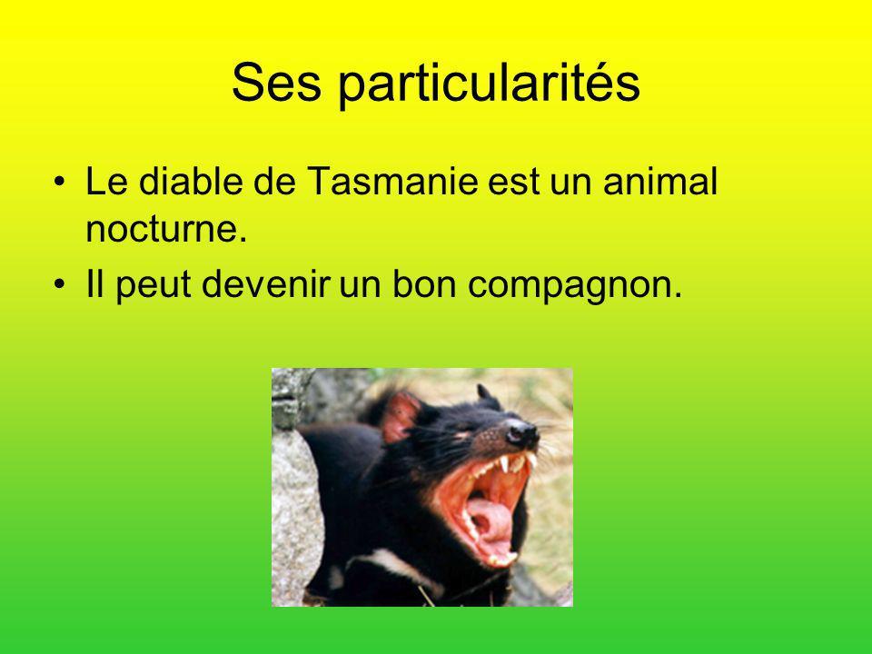 Ses particularités Le diable de Tasmanie est un animal nocturne.