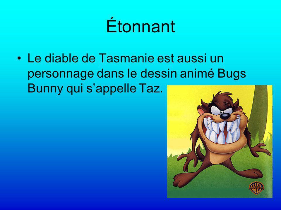 Étonnant Le diable de Tasmanie est aussi un personnage dans le dessin animé Bugs Bunny qui s'appelle Taz.