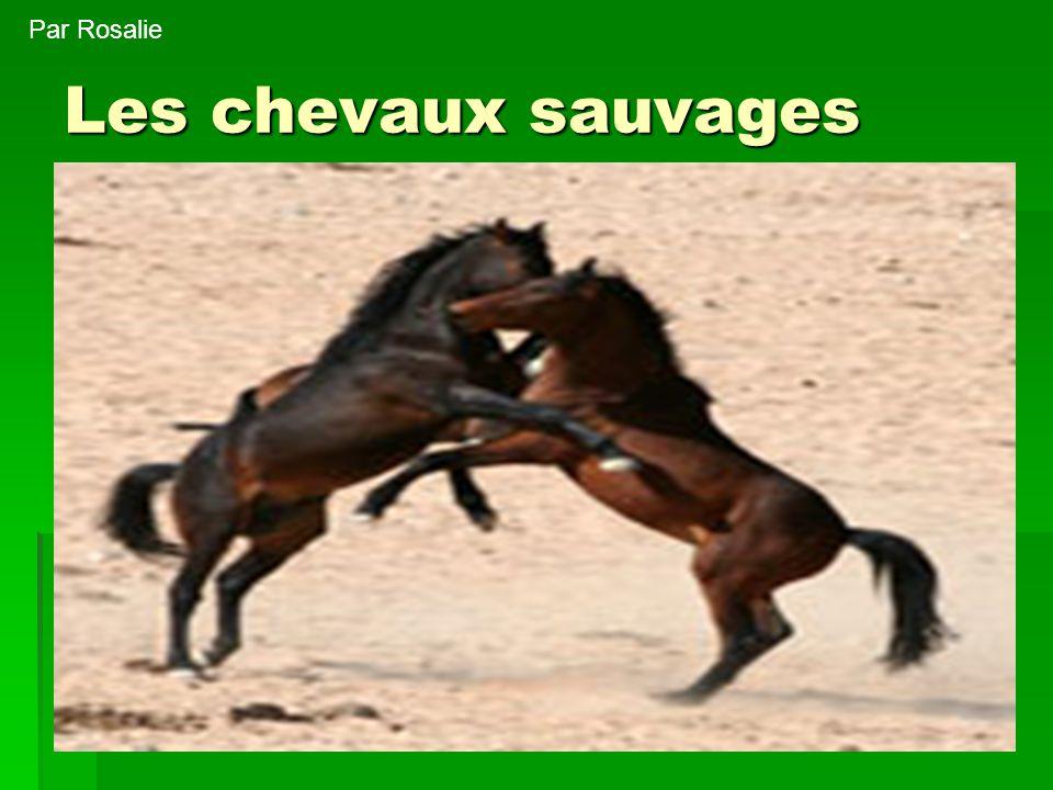 Par Rosalie Les chevaux sauvages