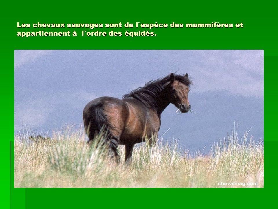Les chevaux sauvages sont de l`espèce des mammifères et appartiennent à l`ordre des équidés.