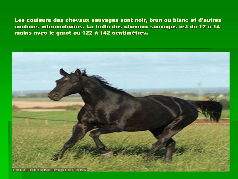 Les couleurs des chevaux sauvages sont noir, brun ou blanc et d'autres couleurs intermédiaires.