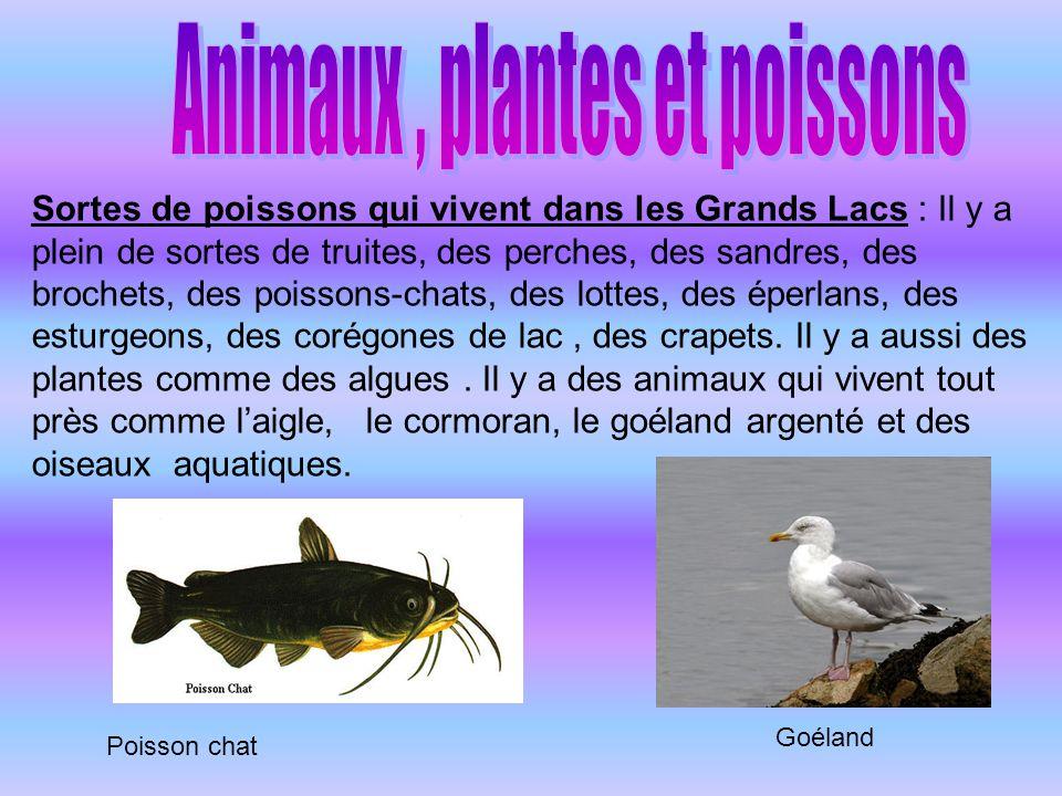 Animaux , plantes et poissons