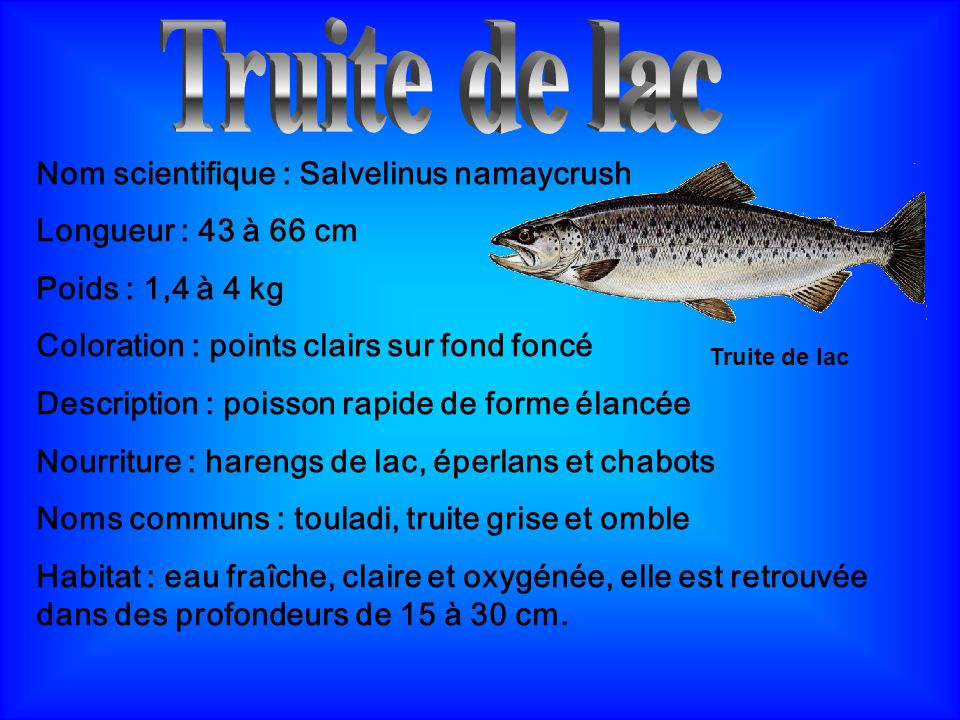 Truite de lac Nom scientifique : Salvelinus namaycrush