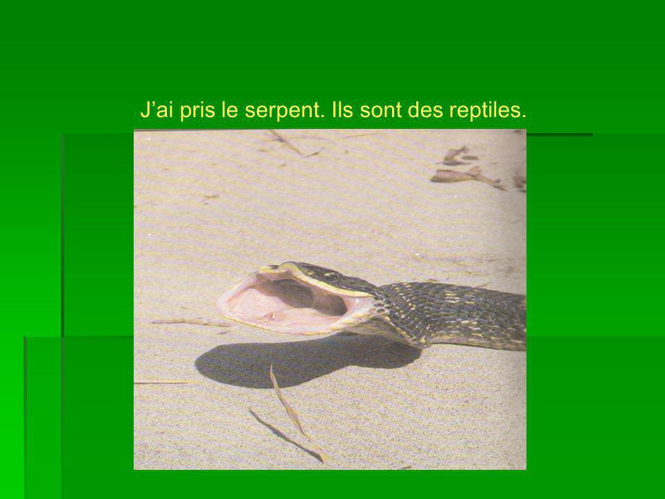 J'ai pris le serpent. Ils sont des reptiles.