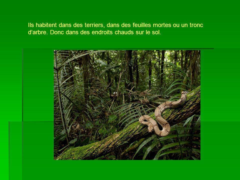 Ils habitent dans des terriers, dans des feuilles mortes ou un tronc d'arbre.