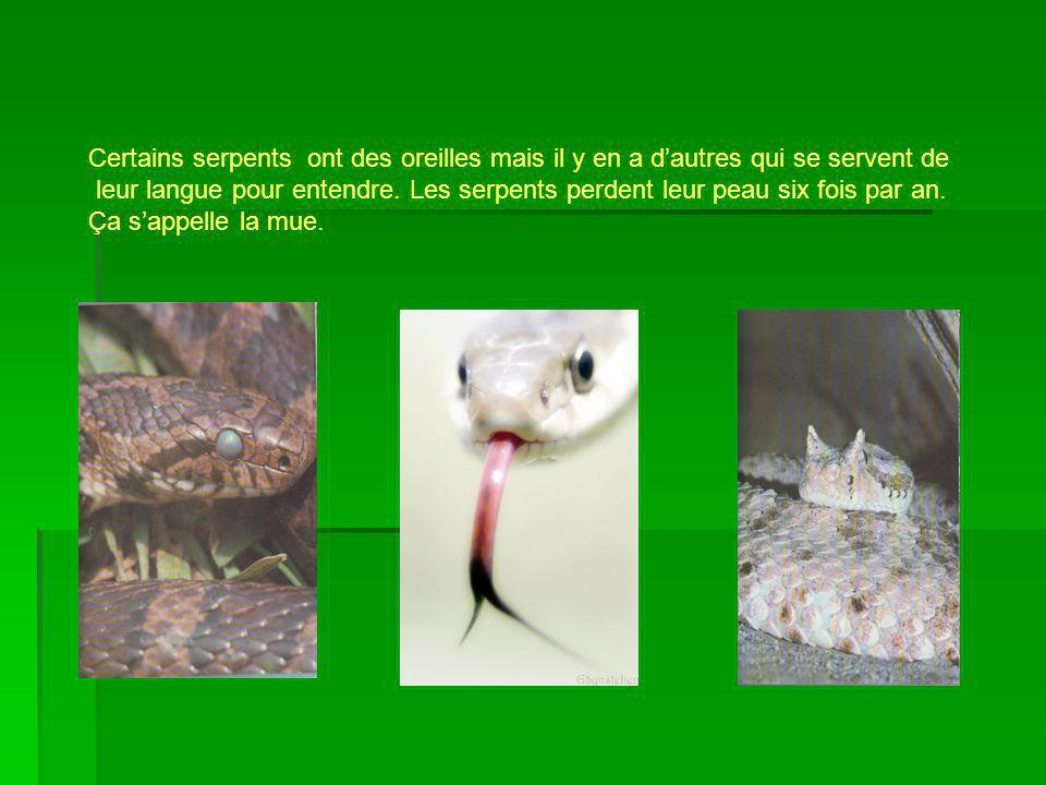 Certains serpents ont des oreilles mais il y en a d'autres qui se servent de