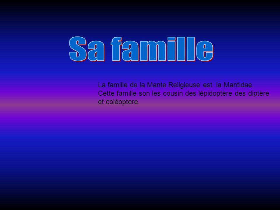 Sa famille La famille de la Mante Religieuse est la Mantidae.