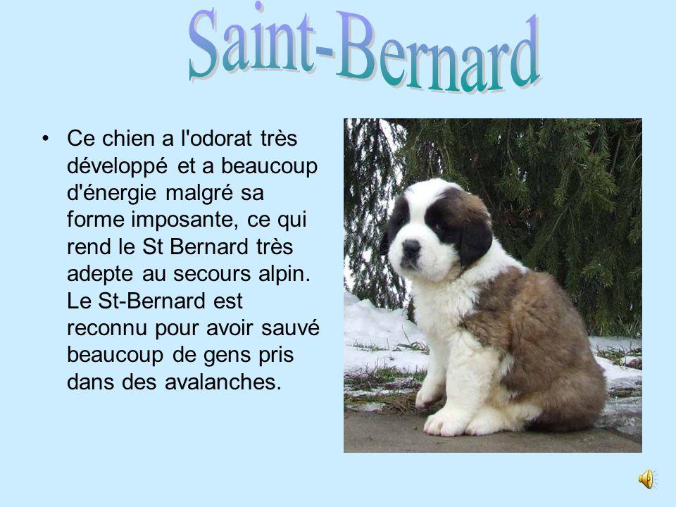 Saint-Bernard .