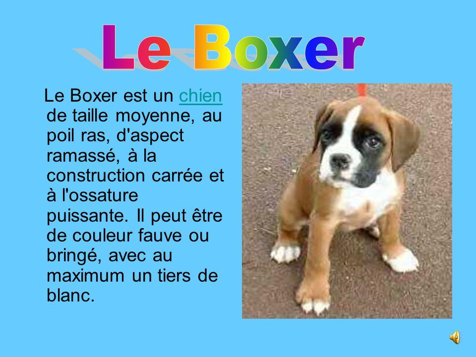 . Le Boxer.