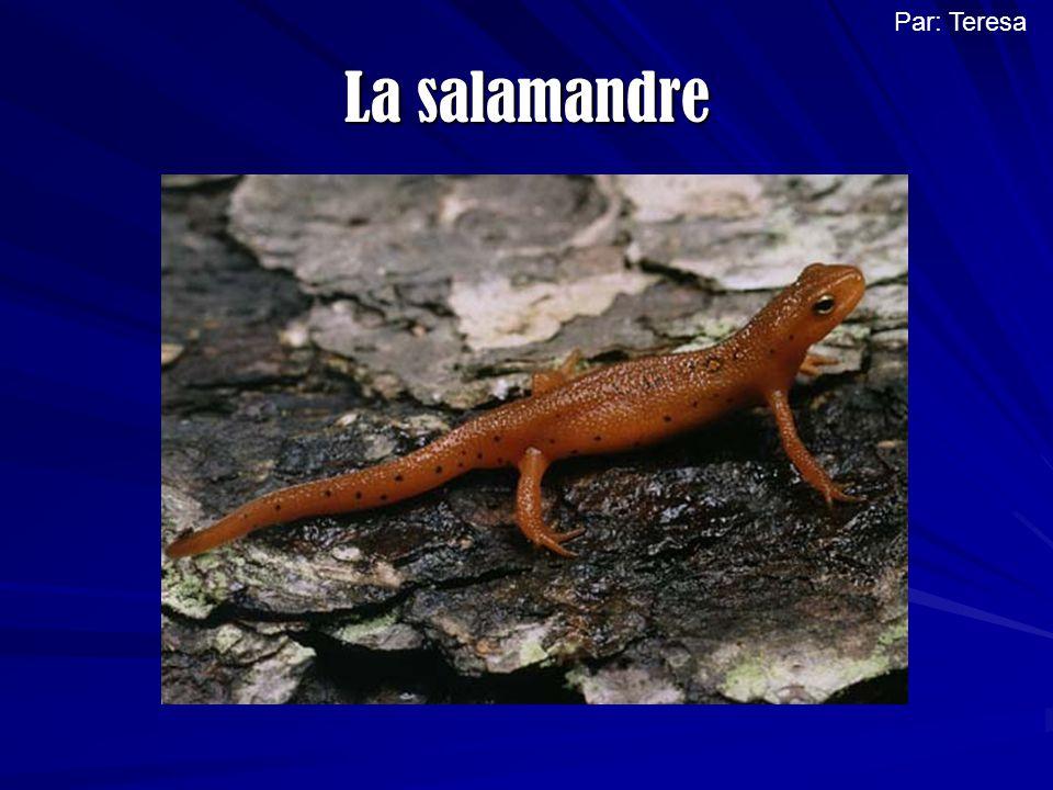 Par: Teresa La salamandre