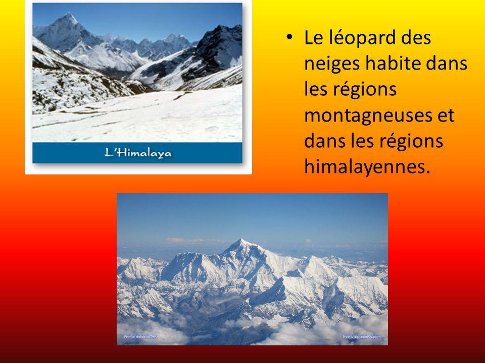 Le léopard des neiges habite dans les régions montagneuses et dans les régions himalayennes.