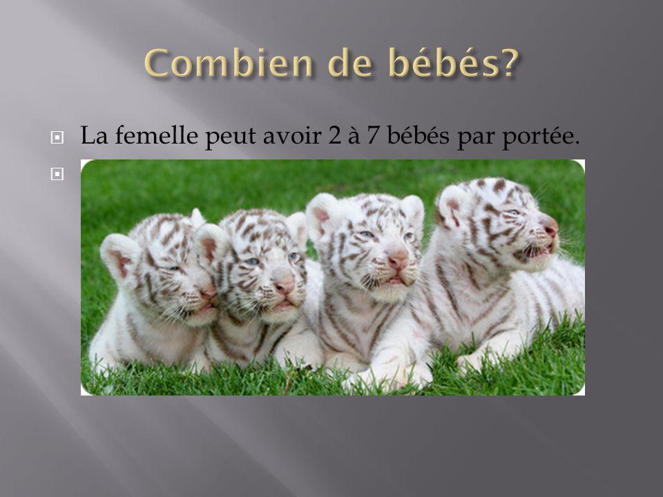Combien de bébés La femelle peut avoir 2 à 7 bébés par portée.