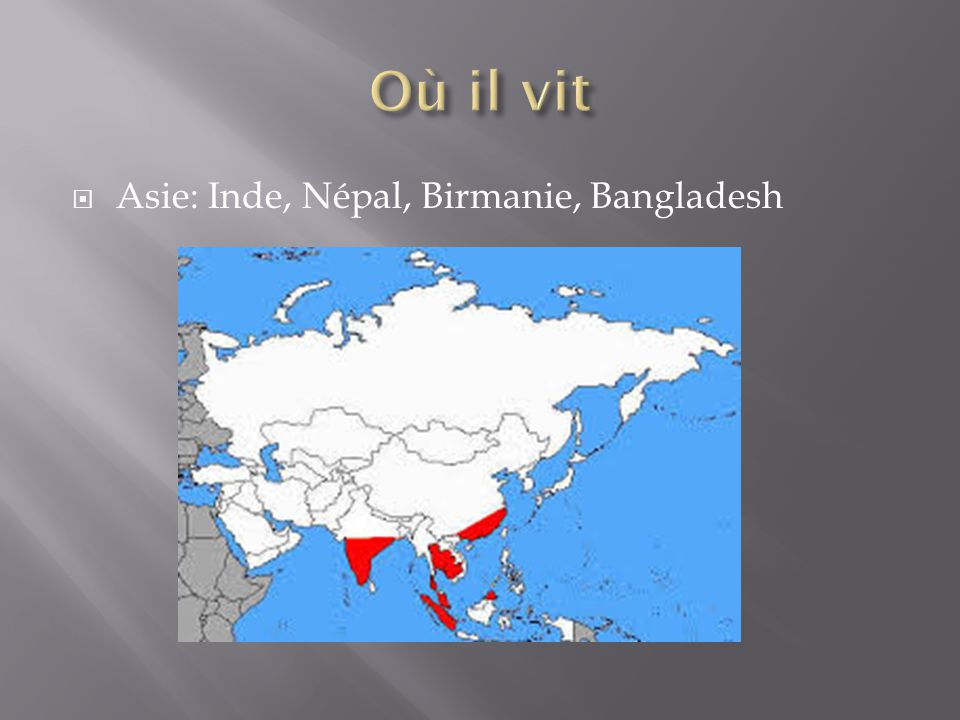 Où il vit Asie: Inde, Népal, Birmanie, Bangladesh