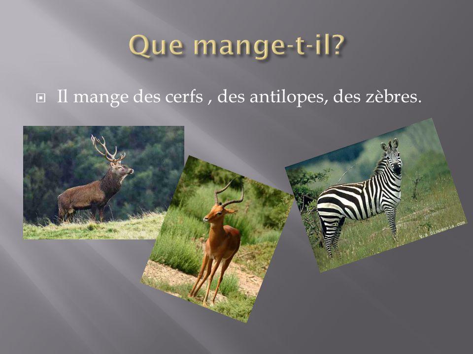 Que mange-t-il Il mange des cerfs , des antilopes, des zèbres.