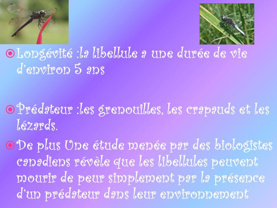 Longévité :la libellule a une durée de vie d'environ 5 ans