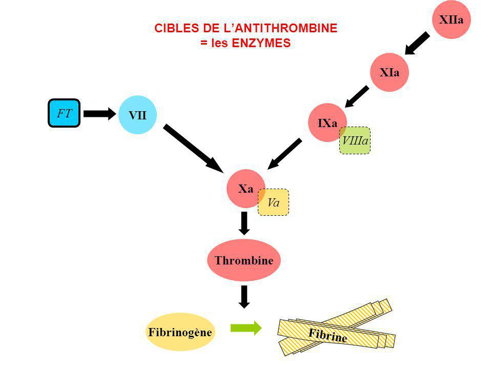 CIBLES DE L'ANTITHROMBINE