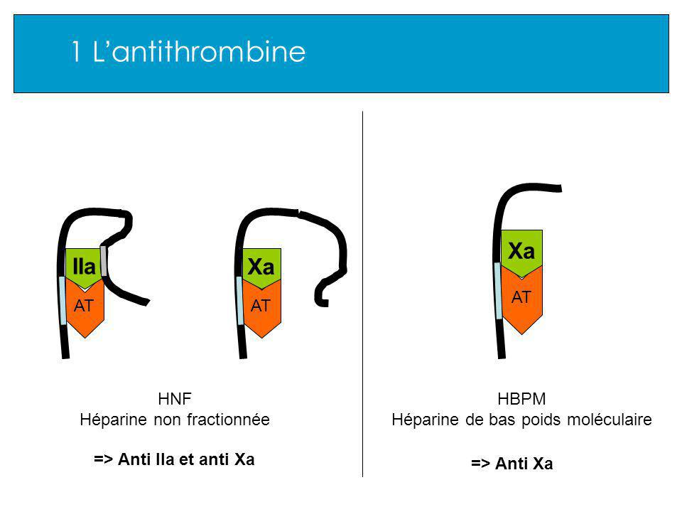 1 L'antithrombine Xa IIa Xa AT AT AT HNF Héparine non fractionnée HBPM